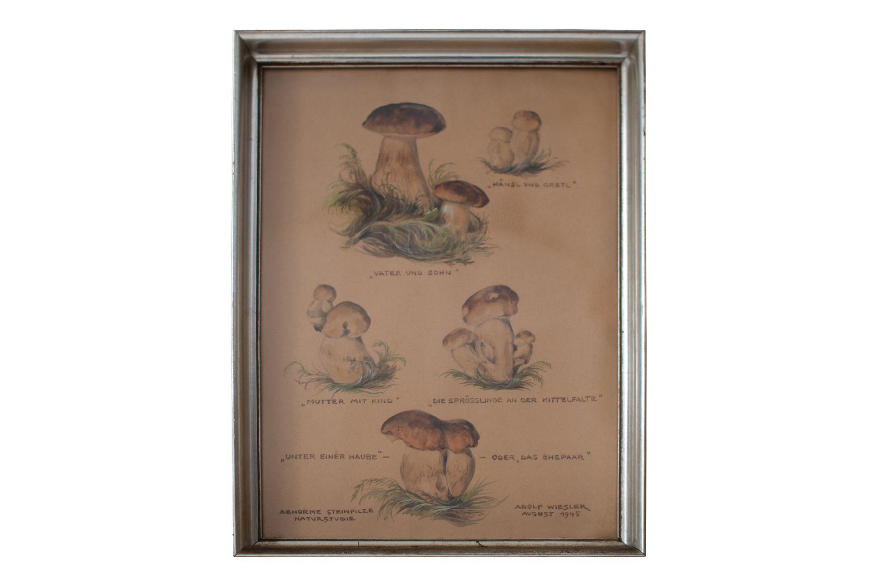 "#94 Abnormal porcini mushrooms | Adolf Wiesler (1878-1958) ""Abnorme Steinpilze"" Image"