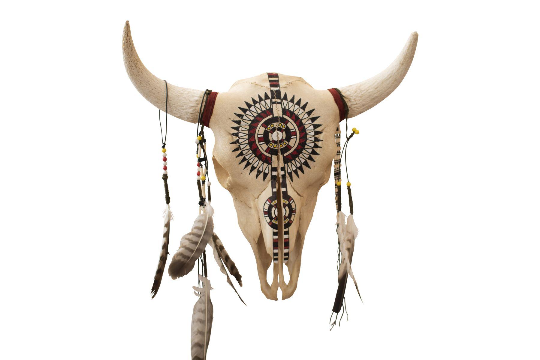 #191 Prairie Bison Skull from Wyoming | Präriebison Schädel aus Wyoming Image